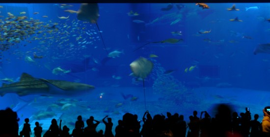 何十枚も写真を撮ったので何を載せようか悩みましたが…やはりこのジンベイザメの居る水槽は圧巻だと思います。他の写真はflickrで公開予定です。