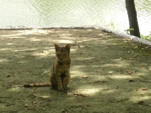 後楽園の川辺に居たネコ。他にも何匹か居ました。