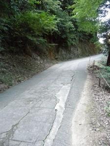 本宮から奥社まではこんな感じの道が多いです。人は本宮までより少なくて歩きやすいですが…。
