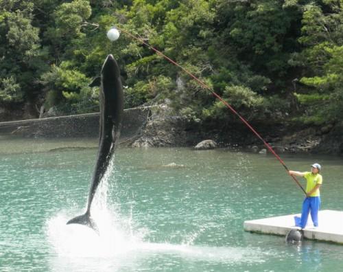 こちらはクジラショー。イルカと同様ハイジャンプをしたり、様々な動きを見せてくれます。イルカよりも一回り以上大きいので、水はねや音に重みを感じます。