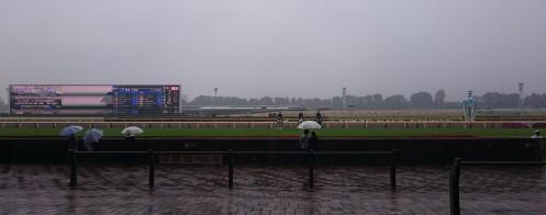 雨の府中。そんな中でも誘導馬&乗り手さんたちはこちらに向かって愛想良い仕草を見せてくれました。ブロッケンさんやユーワ係長が間近で見れて嬉しかったり。