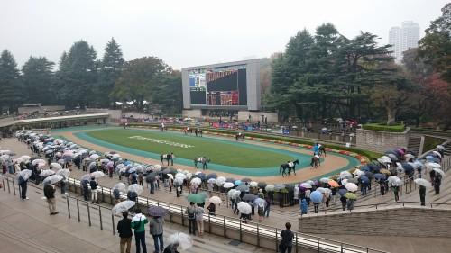 雨なのでパドックは閑散気味でしたがそれでも熱心に馬を見ているファンが多いです。