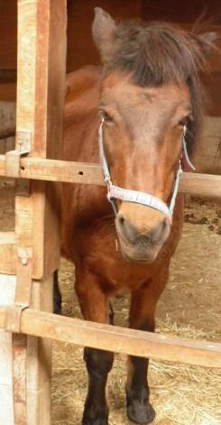 「ん?お客さん?」って感じで顔を出してくれたお馬さん。