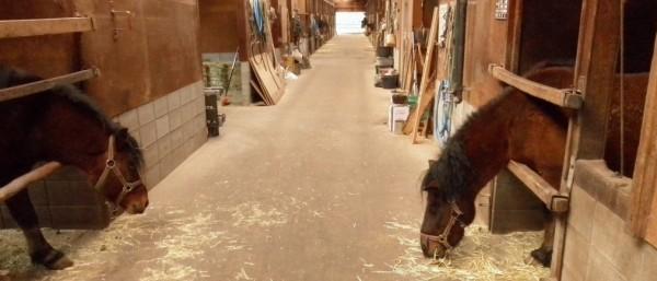 寝藁を一心不乱に食べている馬も…。