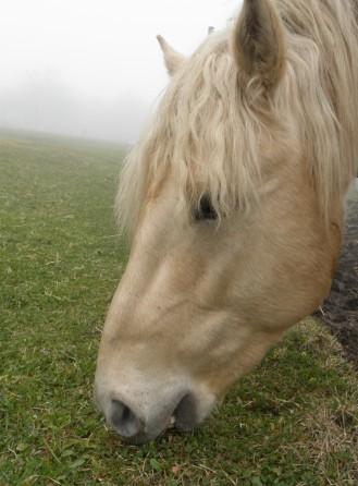 視界不良も関係無しに草をはみはみしているお馬さん。