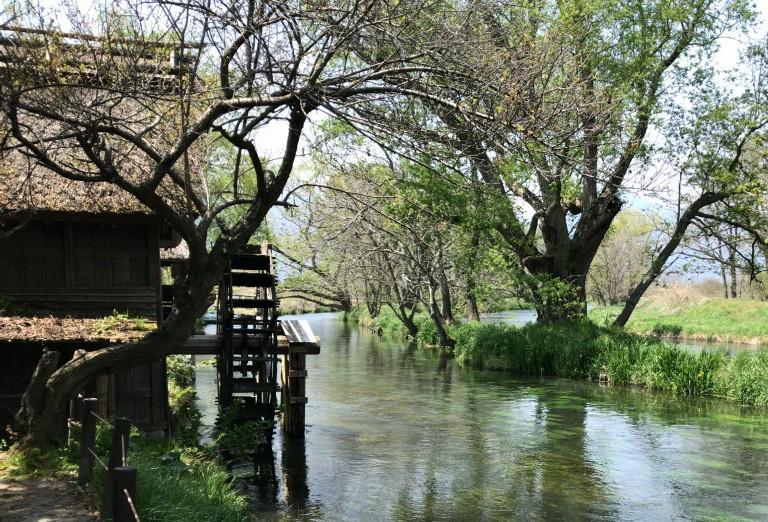 安曇野の清流。水が透き通っています。水車がその清流でゆっくりと回っています。