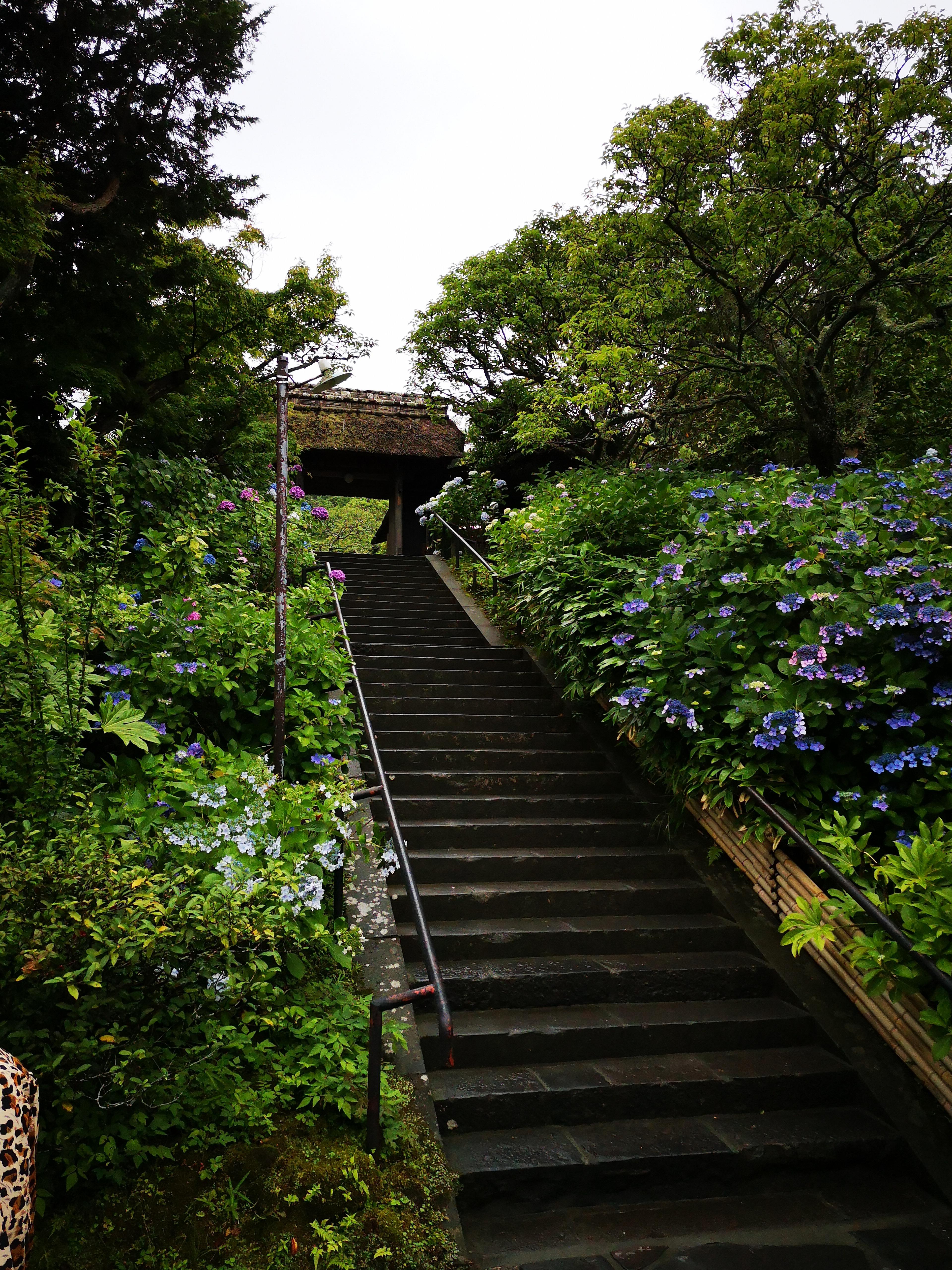 東慶寺の入り口です。あじさいなど花々が植えられていてきれいです。(クリックで原寸)