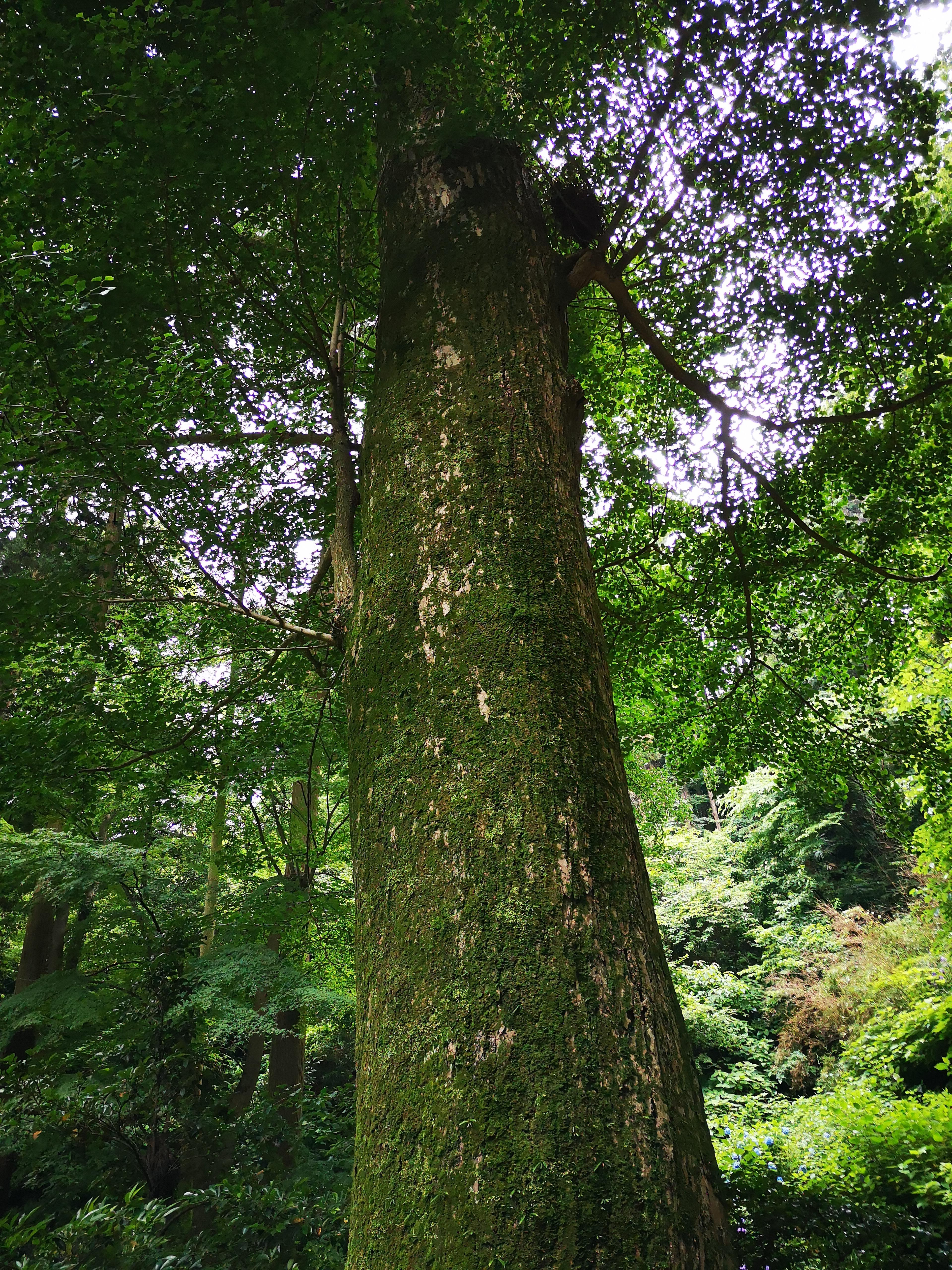 天気の日だと木漏れ日と木の香りが降り注いで心地良いのですが、今は雨が降り注いでます…。(クリックで原寸)